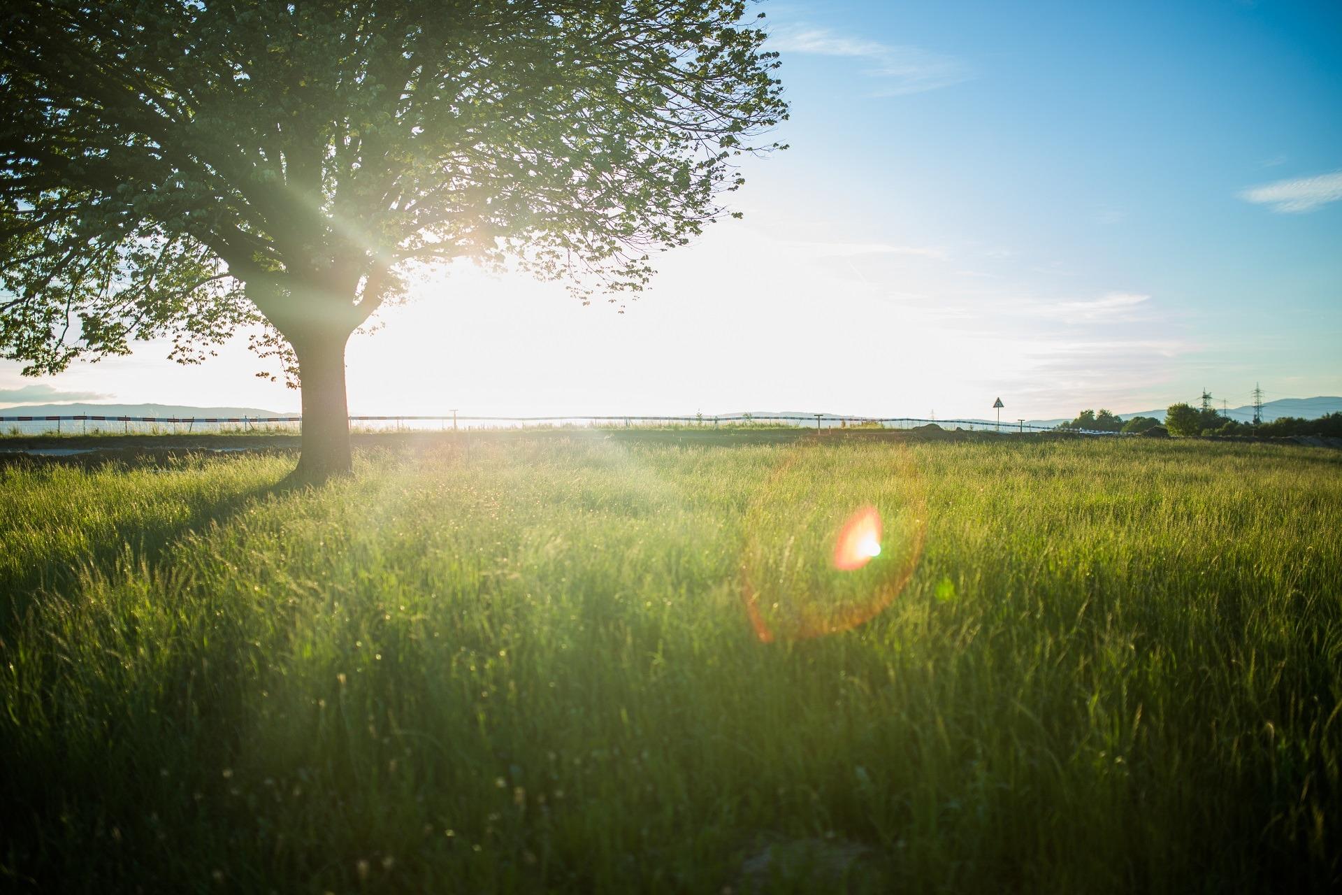 Eine grüne Wiese mit einem Laubbaum auf die Sonne scheint.